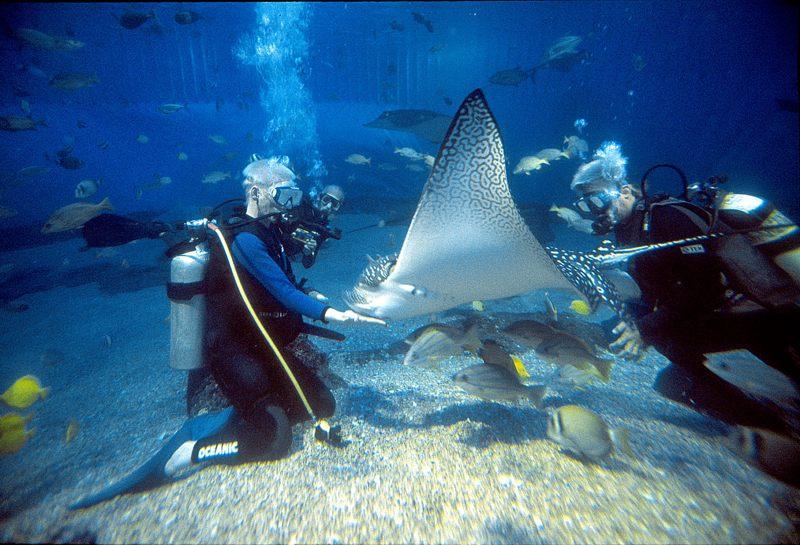 Aquarium auf Palma de Mallorca